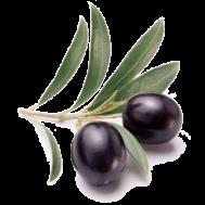 sceau-d-olives-noir-pour-pizzas-5-kg-copie
